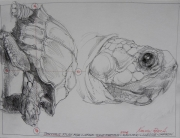 TORTIOUS STUDY FOR LARGE TULIP TORTIOUS, 2016 SOLD