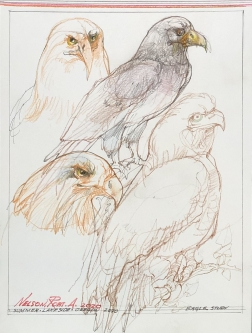 Robert A. Nelson |  Eagle Study, 2020 |  Pencil, colored pencil |  9 x 12 | unframed |  $400.