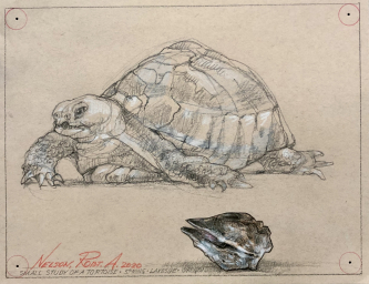SOLD- Robert A. Nelson |   Tortoise, 2020 |  Pencil |  12 x 19 1/2 |  $ 250. SOLD