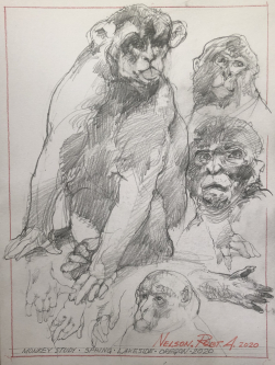 SOLD- Robert A. Nelson |   Monkey Study, 2020 |  Pencil |  12 x 9 |  $150. SOLD
