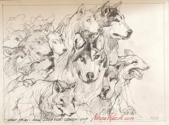 Robert A. Nelson  |  Wolf Study, 2019 |  Pencil |  12 X 9 |  $225. SOLD