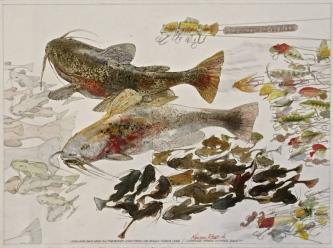 FISH PLUGS, 2015 - SOLD