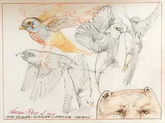 Robert A. Nelson  |  Bird Studies, 2019 |  Pencil, colored pencil |  9 X 12 |  $150. SOLD