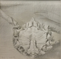 DALE O. ROBERTS  CRAB  Silverpoint 4.5 x 4.5  $200